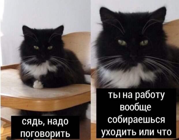 9 смешных мемов про котов, которым мешают люди на самоизоляции