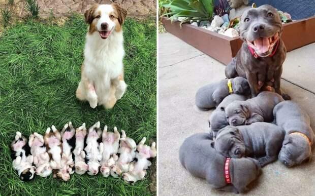 10+ гордых и счастливых хвостатых мамочек вместе со своими щенками