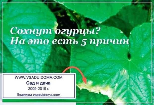 Сайт о саде, даче и комнатных растениях.