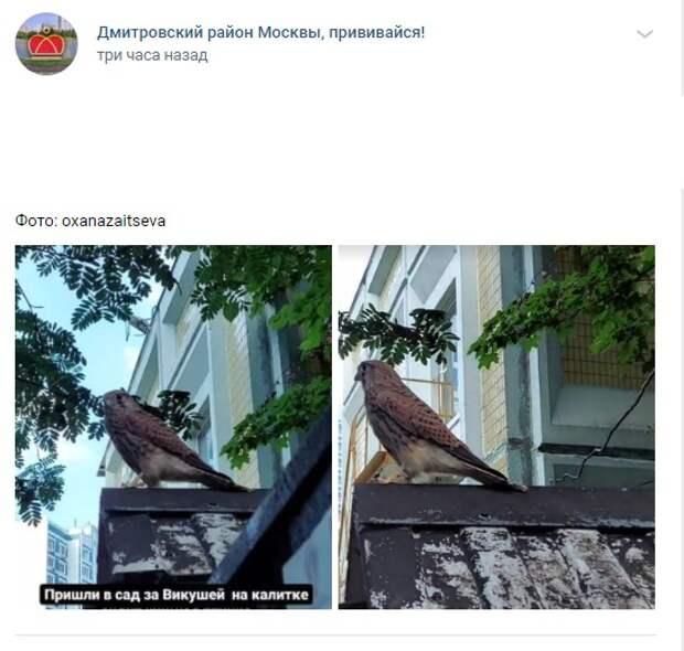 Фото дня: хищную птицу заметили в Дмитровском