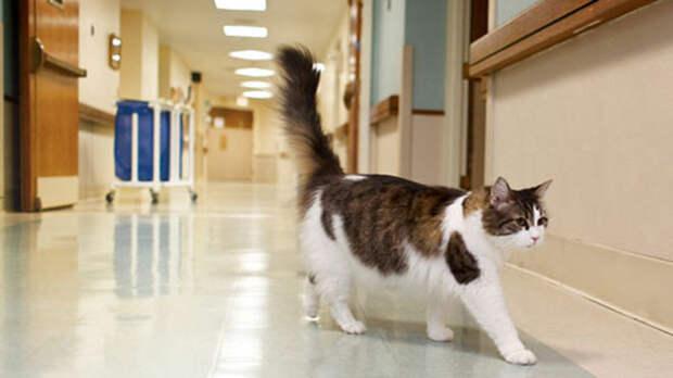 Кот постоянно просился в палату к больным. Зачем он это делал?