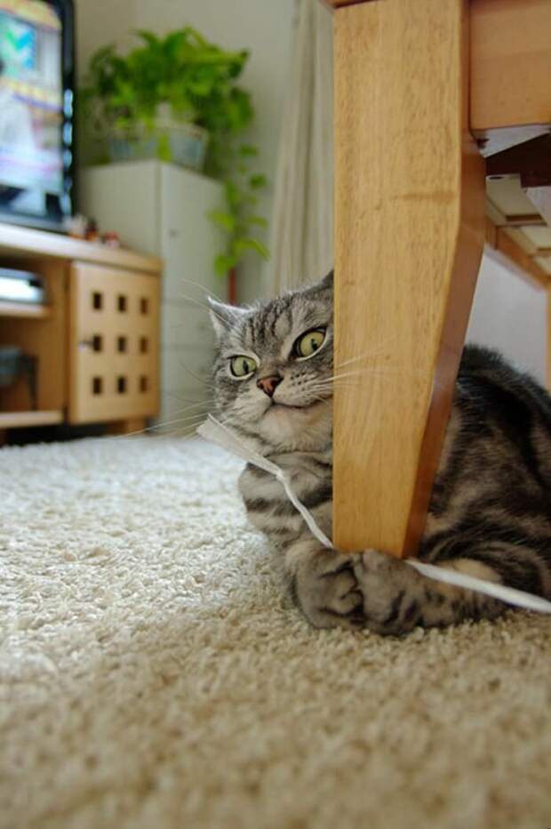 Коты(приколы)