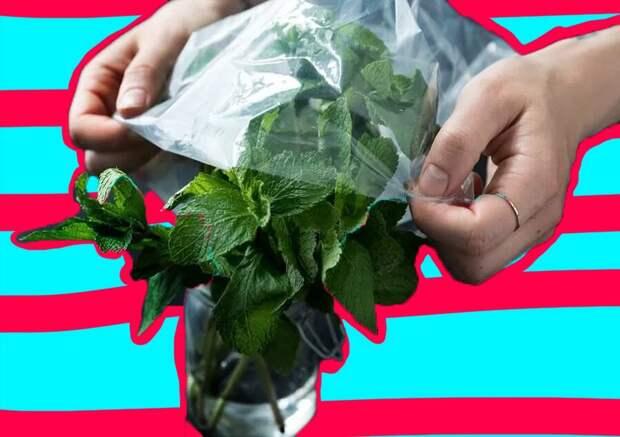 Как сохранить зелень вхолодильнике