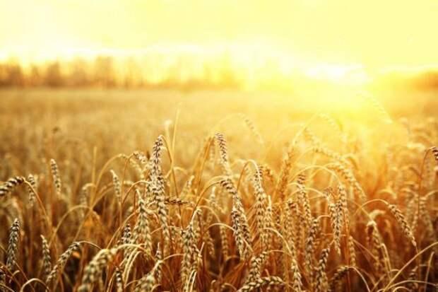 Стратегия РФ во время «идеального шторма» на рынке зерна привела немцев в восторг