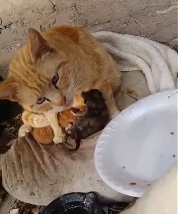 Мать закрывала собой продрогших котят, а сама мокла под дождем история, история спасения, коты, котята, кошки, помощь животным, спасение животных