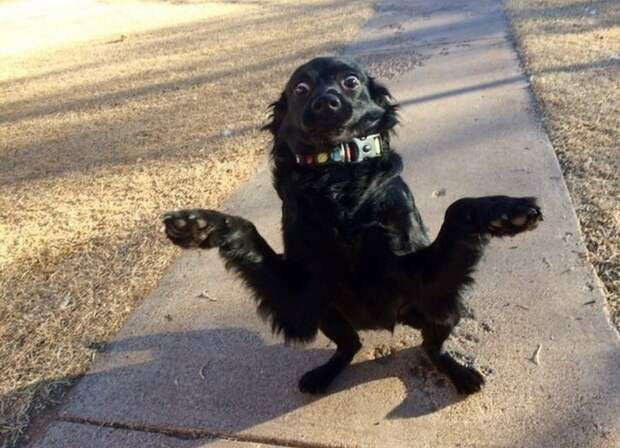 Когда программа «собака» дала сбой и зависла: 15+ забавных фото с домашними любимцами