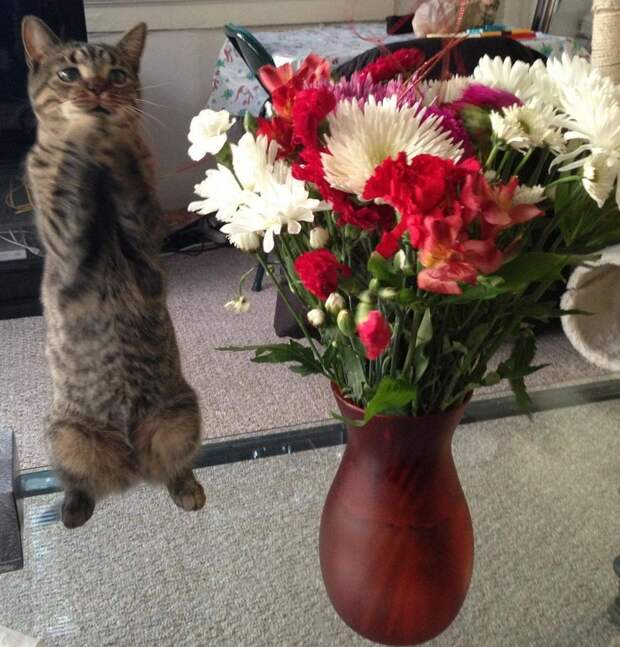 Забавные и симпатичные котики поднимут настроение!