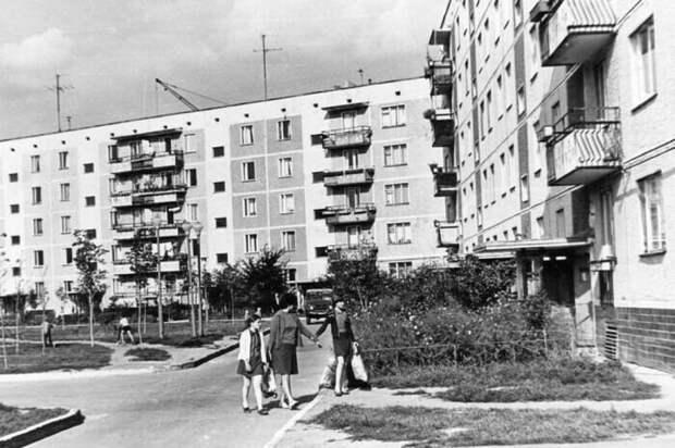 Ещё в начале XX века были проведены ряд исследований, доказавших, что постройка домов возможна до отметки, которая не превышает высоту деревьев / Фото: aif.ru
