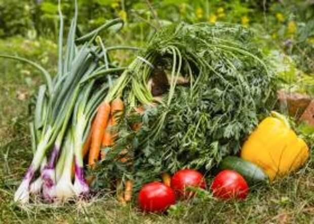 Биоудобрение CropForce - повышает урожайность до 2х раз
