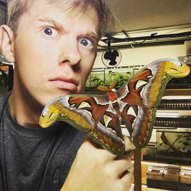 Парень очень любит экзотических насекомых живность, люди, насекомый