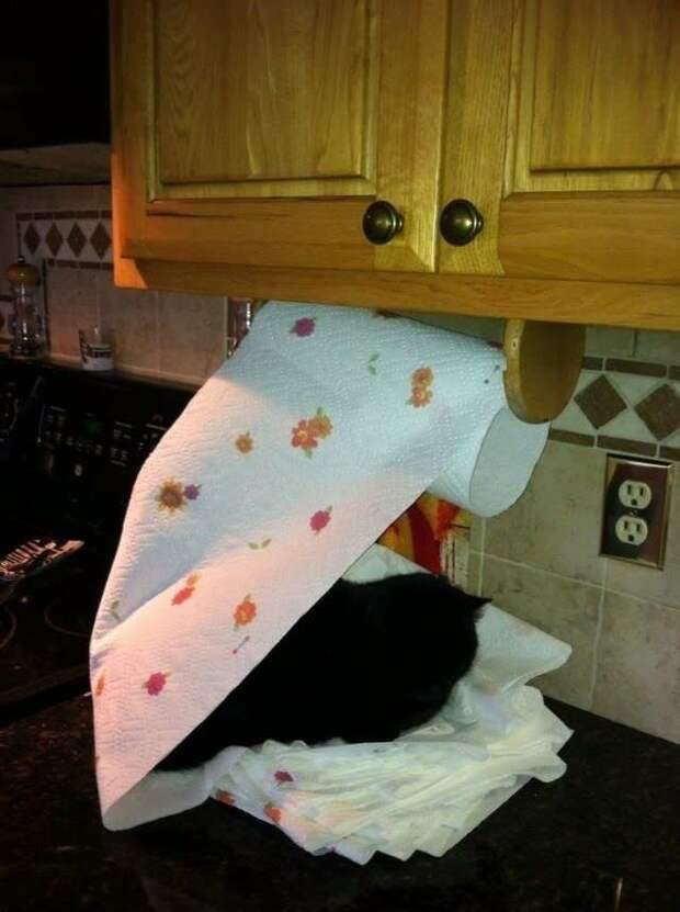 Кошки - главные хозяева в доме