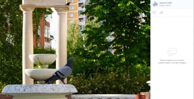 Фото дня: птица мира