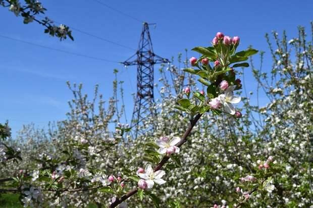 Адыгейский филиал «Россети Кубань» обеспечил электроэнергией 49 объектов АПК