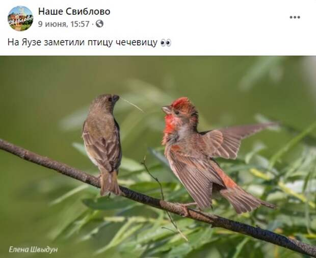 Фото дня: на Яузе заметили птицу чечевицу