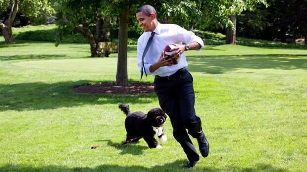 Умерла собака Обамы