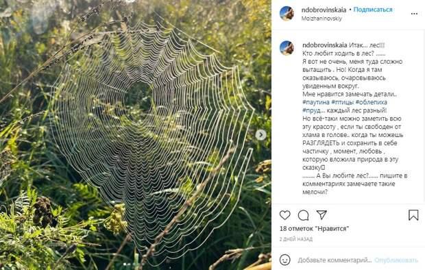 Фото дня: логово опасного хищника обнаружили в Молжаниновском