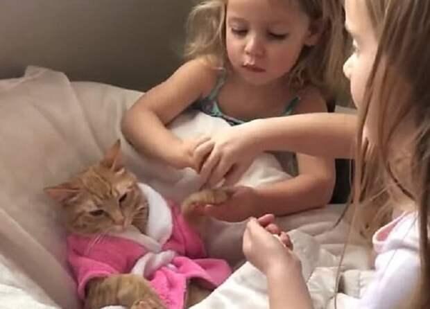 «Vip — обслуживание»: как две девчушки пестовали мурлыку