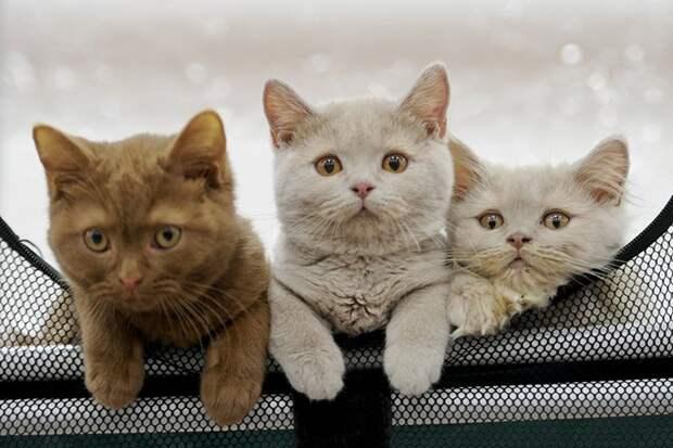 «Семь с половиной кошек»: как рассчитать допустимое количество питомцев в квартире