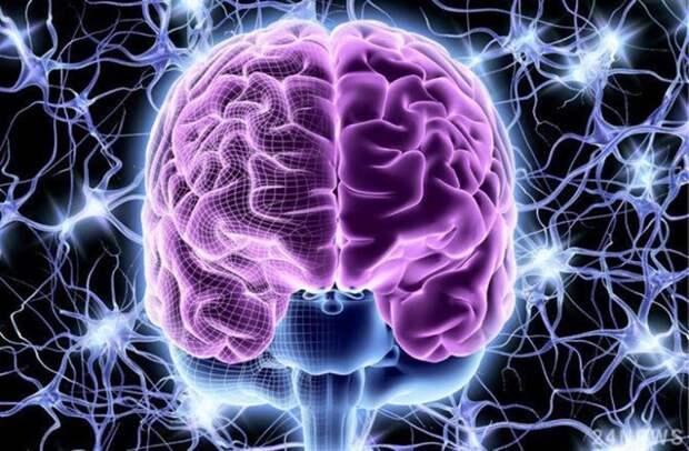 6 научных фактов о мозге, знание которых поможет вам улучшить свою жизнь