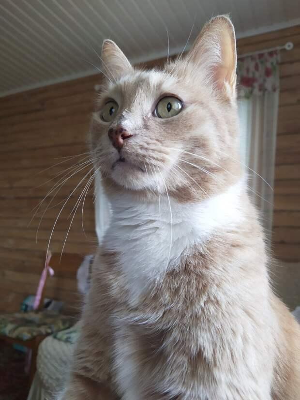 Зачем кошке имя?