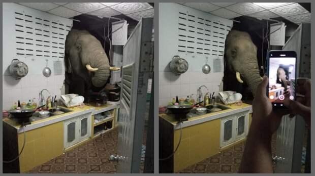 В Таиланде дикий слон пробил стену дома, чтобы поесть риса