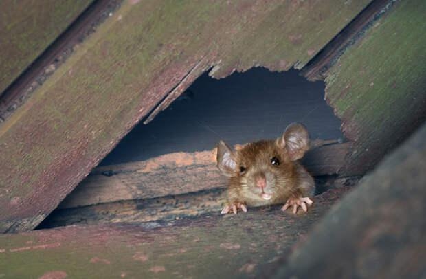 Куда бегут крысы с корабля?
