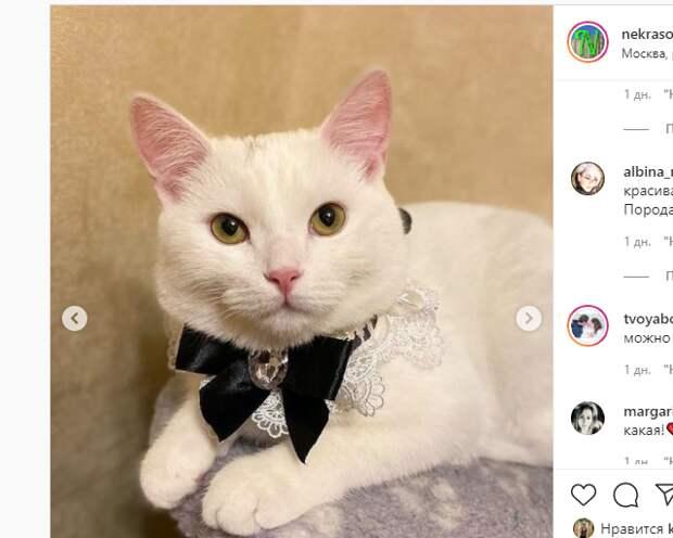 Благородную кошку в Некрасовке отдали вместе с приданым