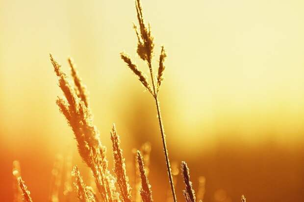 Синоптики предупредили, что жара в Удмуртии может продержаться до конца лета