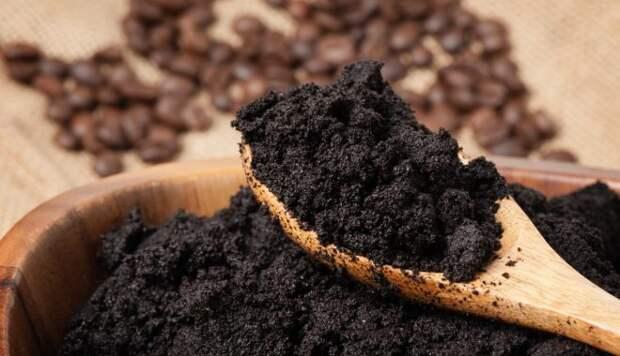 Кофейная гуща в роли удобрения