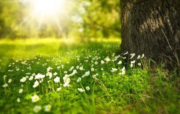 Бесплатная экскурсия по парку «Покровское-Стрешнево» и экомарафон пройдут завтра