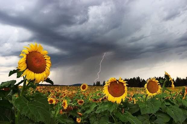Дожди и грозы придут в Удмуртию в четверг