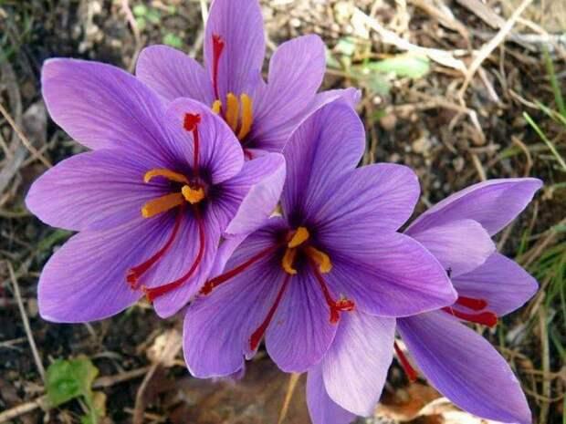 Самые дорогие цветы мира. Остролепестный эпифиллум — бесценный цветок.