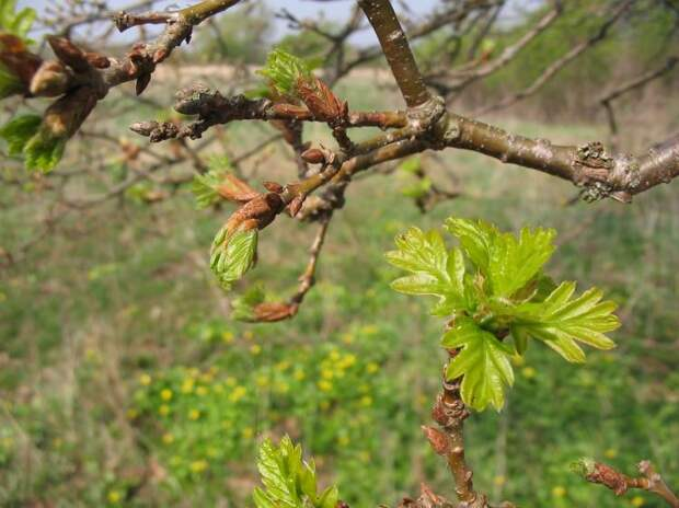 Народные приметы апрель
