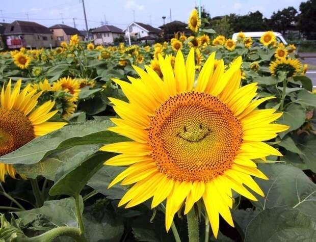 Подборка милых фотографий и картинок для улыбки и позитива