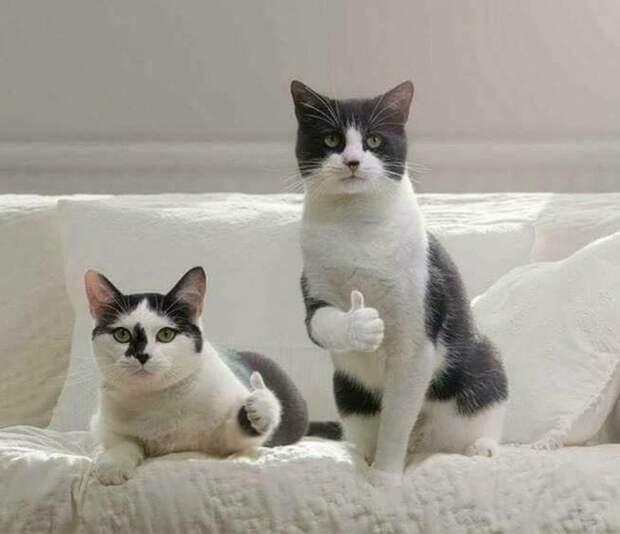 Картинки по запросу коты одобряют мем