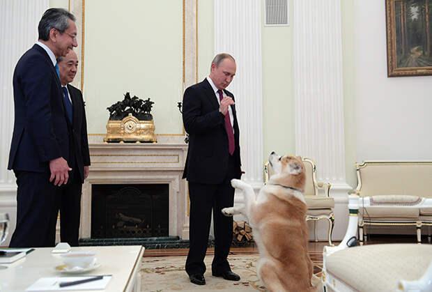 Собаку по кличке Юмэ подарили японцы в благодарность России за помощь в ликвидации последствий цунами