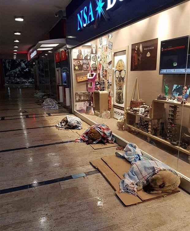 Вот так согреваются в пледах собаки у торгового центра буря, животные, снег, спасение, стамбул