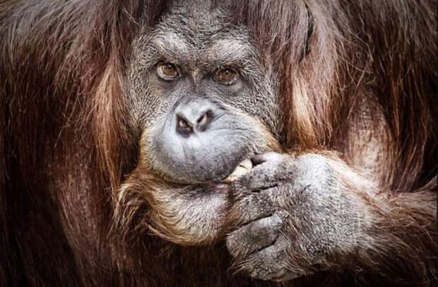 Как животные обманывают хищников?