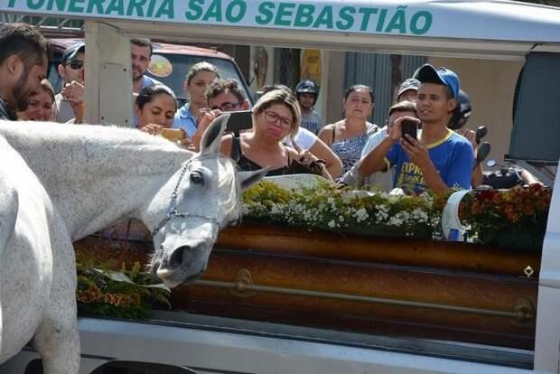 Конь пришел на похороны любимого хозяина, чтобы отдать ему последний долг конь, люди и звери, прощание, трогательно