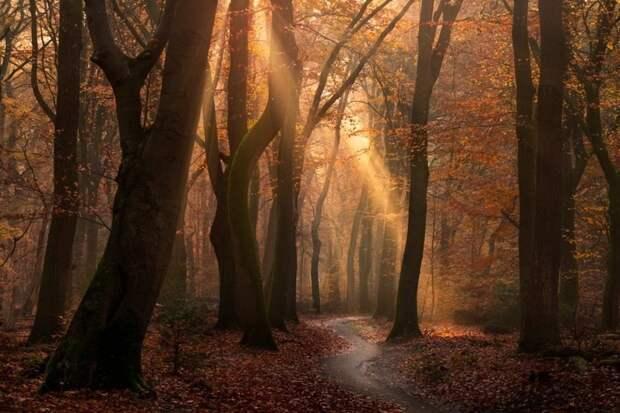 Сияние золота: какой волшебной была осень в голландском лесу в нынешнем году