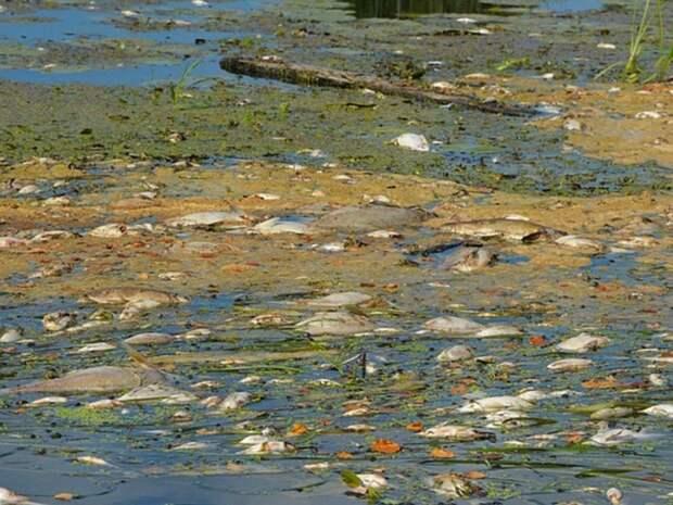 В Смоленской области рыба массово погибла в реке Гжать