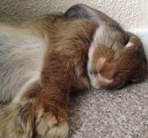 Спят усталые зверюшки…