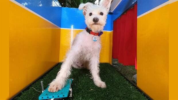 Собака научилась сама делать селфи. И это милота!