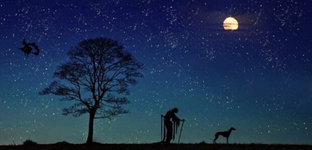 Собака и две ведьмы на фоне ночного неба