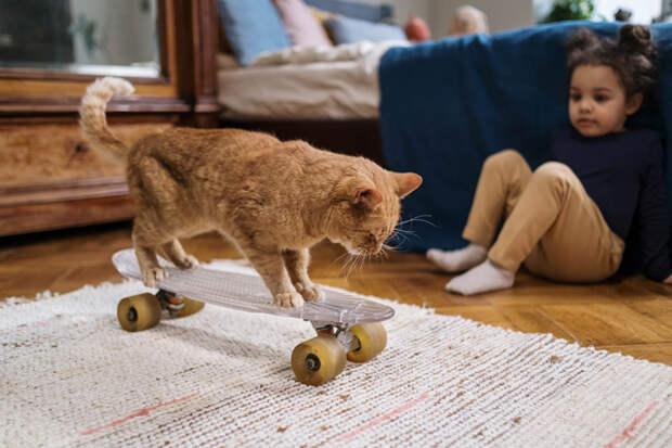 10 популярных заблуждений о домашних животных и ветеринарии