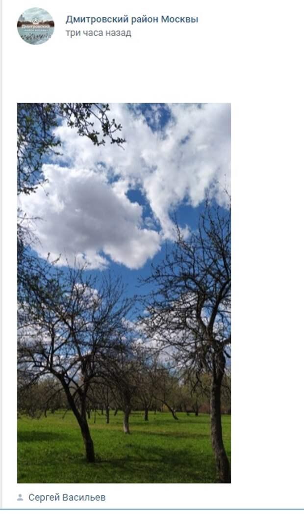 Фото дня: яблоневый сад в парке «Ангарские пруды»