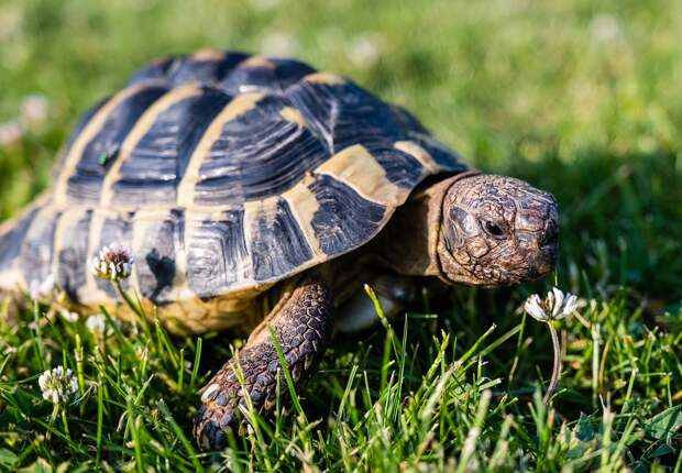 Болотных черепах заметили на набережной Яузы