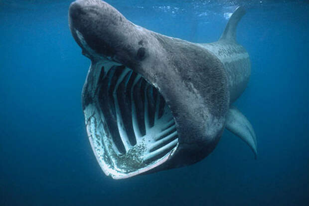 Спутниковые археологи разглядели фотографиях из космоса гигантскую акулу