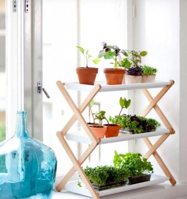 10 симпатичных идей для тех, кто мечтает о мини-огороде у себя на кухне