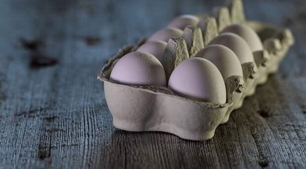 Как выбрать качественные куриные яйца